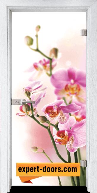 Стъклена интериорна врата Print G 13 2 Y 1